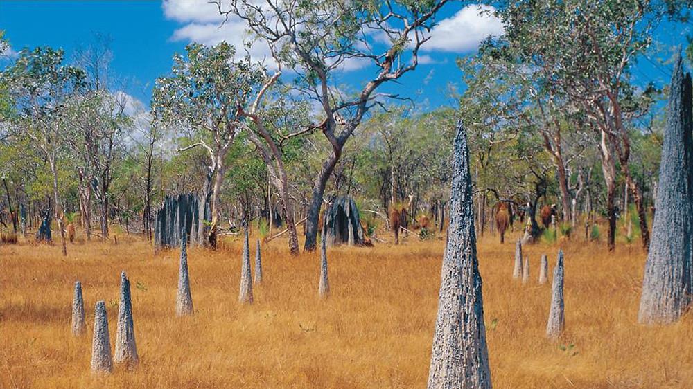 Terminte mounds in Australia