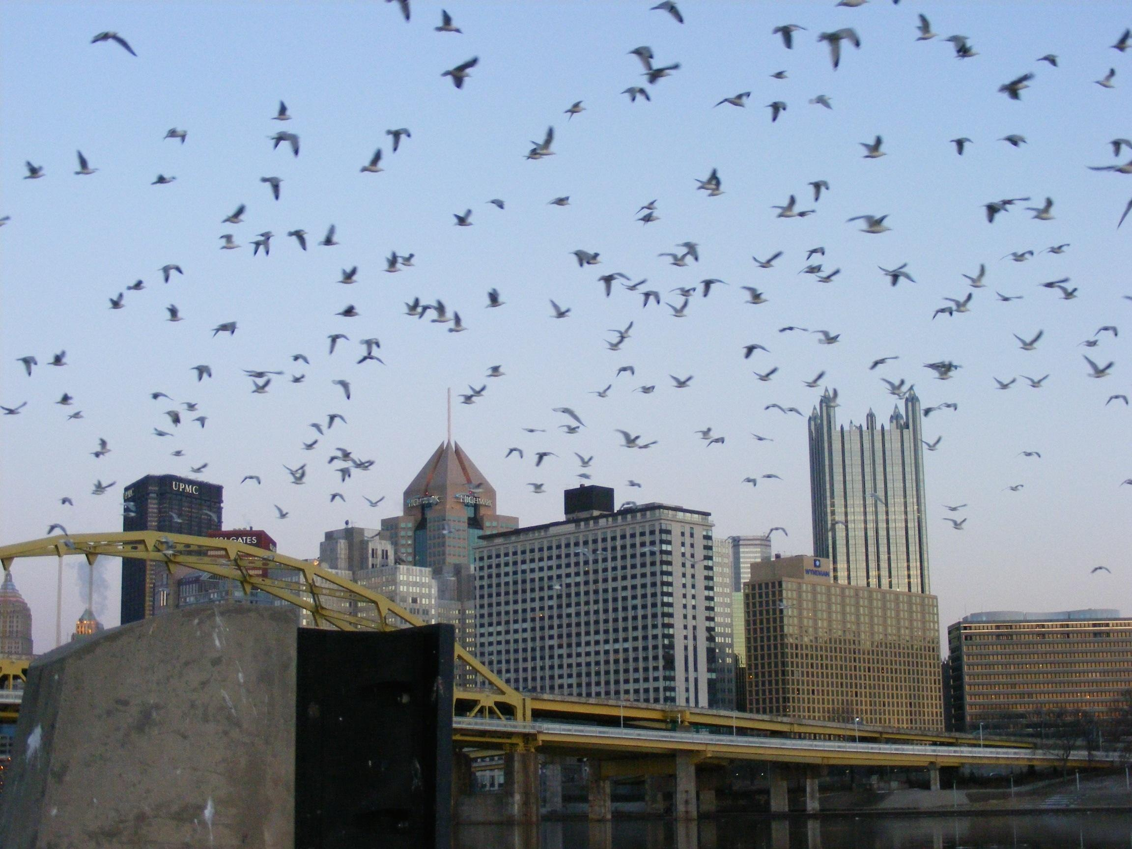A Flock of Seagulls in the Burgh