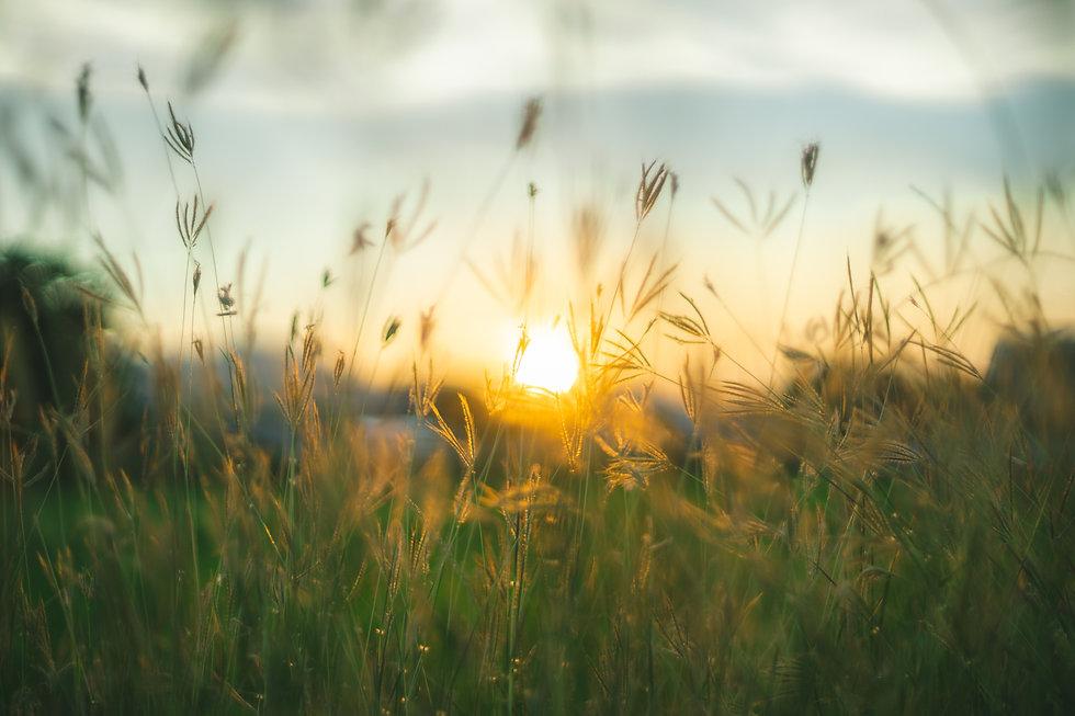 Prairie grasses twilight.jpg