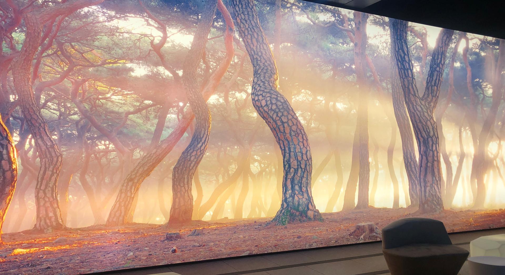 <정령들의 숲> Light Wall, 20mx4m