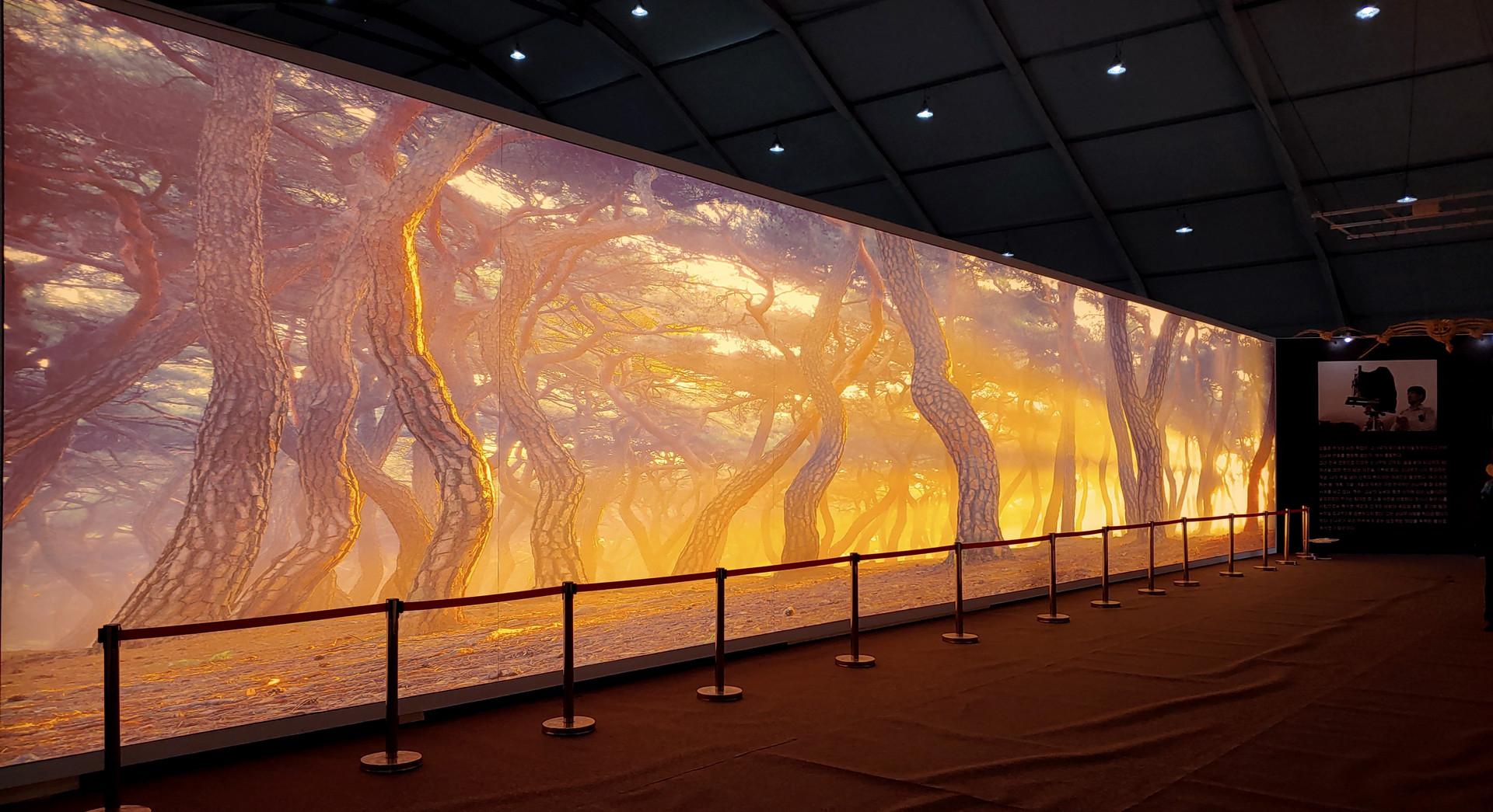 정령들의 숲 2019, 21mx4m, Light Wall, 2019 대한민국 산림문화박람회