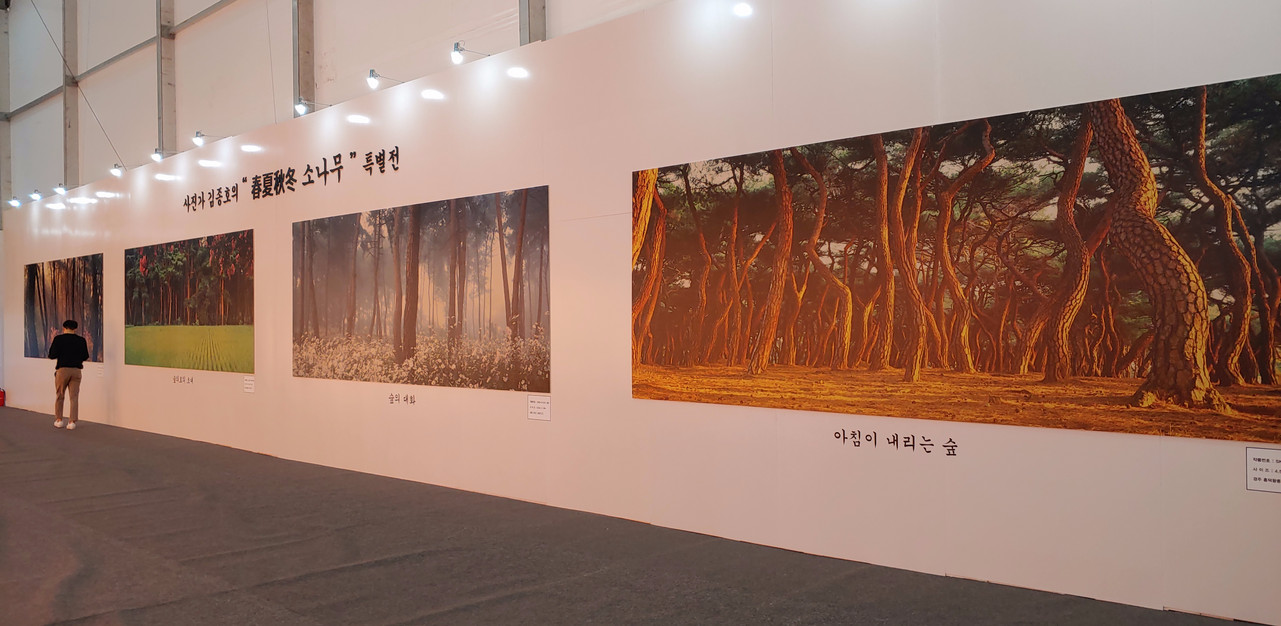 사진가 김종호의 춘하추동 소나무 특별전_2019 대한민국 산림문화박람회