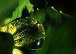 Comme une larme de Béryl - Lauréate concours photo Lautrec 2014 - Tarn - France