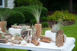 Showing of Driftwood & Air Plants