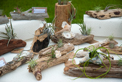 June Showing of Driftwood