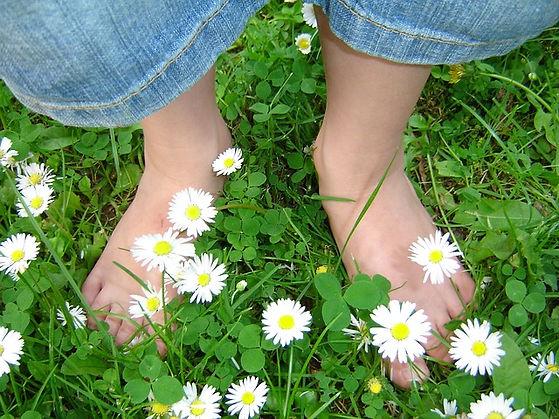 daisy-319695_640.jpg