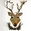 Thumbnail: Oh Deer