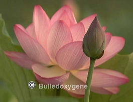Massage intuitif Bulledoxygene.com.jpg
