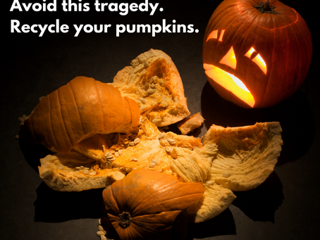 You can recycle those Halloween pumpkins for wildlife in your own backyard