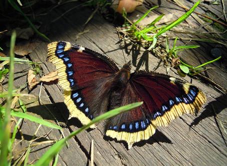 Butterflies 101