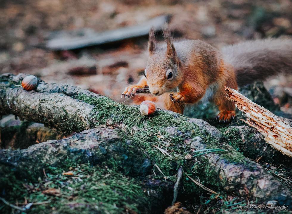 Stalking squirrel 4.jpg