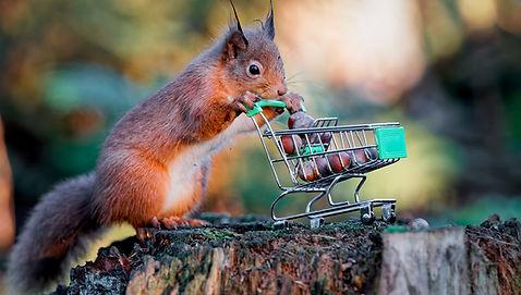 Squirrel_trolley-1.jpg