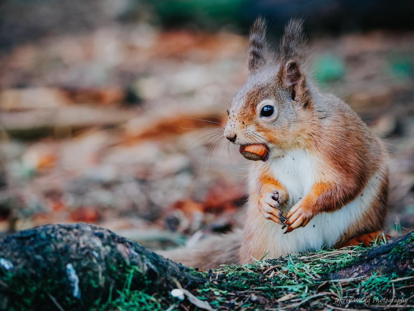 Stalking squirrel 5.jpg