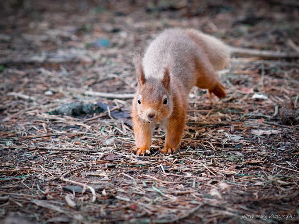 Squirrel yoga 2.jpg