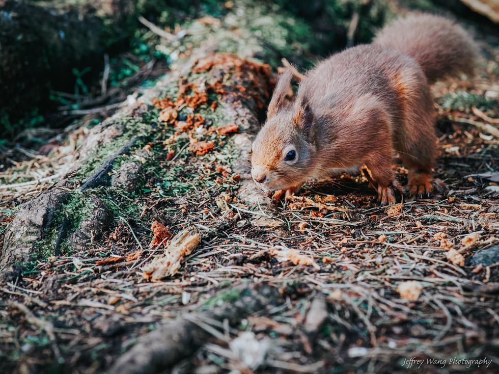 Stalking squirrel 2.jpg
