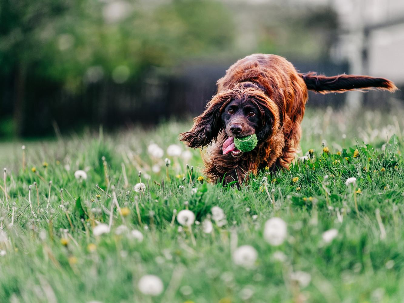 Dog photos 1.jpg