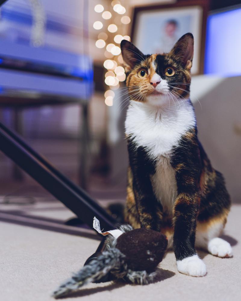 Kittten 5.jpg