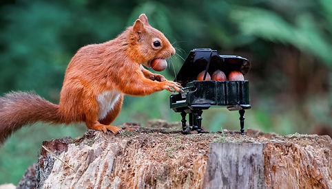 Squirrel piano 2.jpg