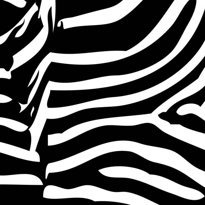 7_Zoopol_Zebra.jpg