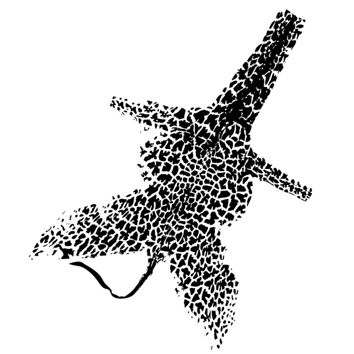 11_Zoopol_giraffe.jpg