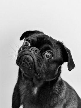 dog black no background.jpeg