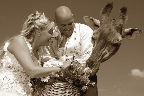 wedding giraffe.jpg