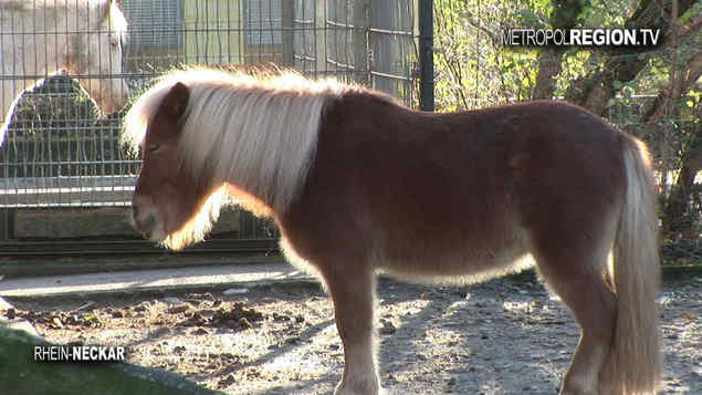 Ponnys