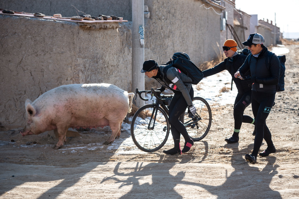 3 asian cyclist looking at a large pig in China village