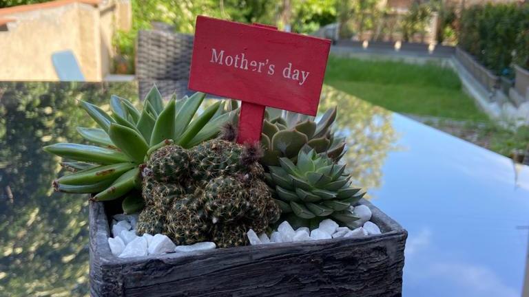 Composizioni piante grasse speciale festa della mamma