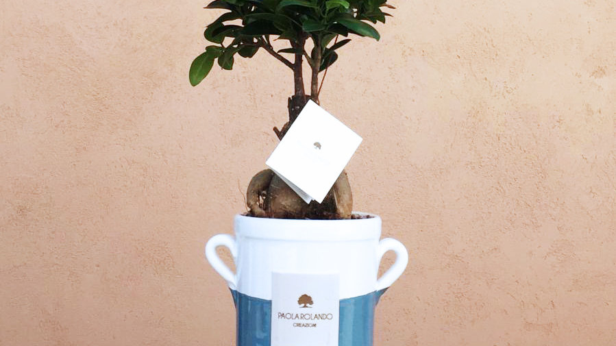 vaso anfora con bonsai