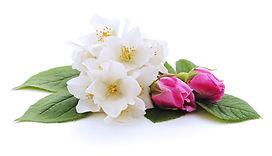 WhiteJasmine&RosesBunch.jpg