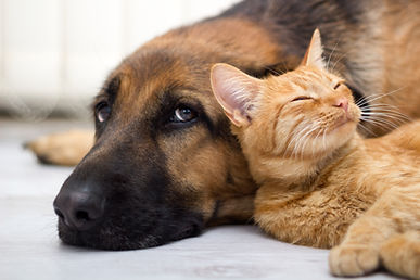 Pet Sitting Youngstown Ohio