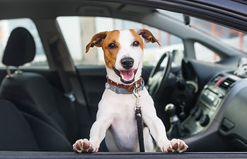 Pet Taxi Youngstown Ohio