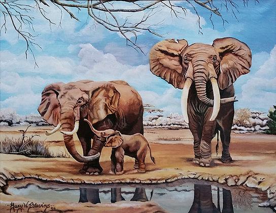 Morgan's Elephants