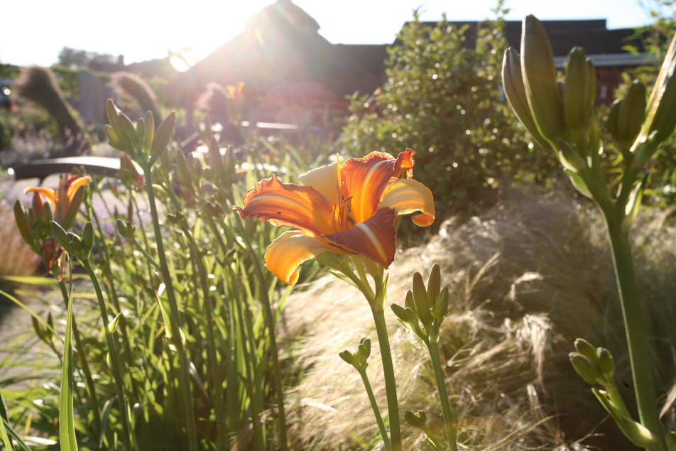 Garden designer norwich & norfolk