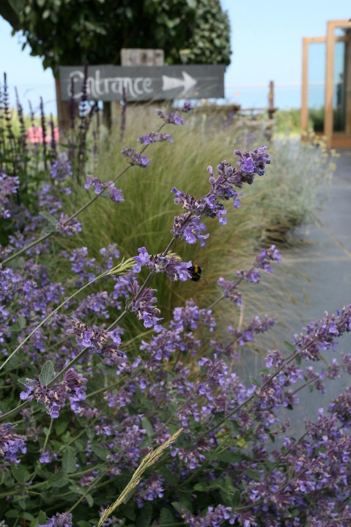 Local Garden designer north norfolk coast blakeney cromer.jpg
