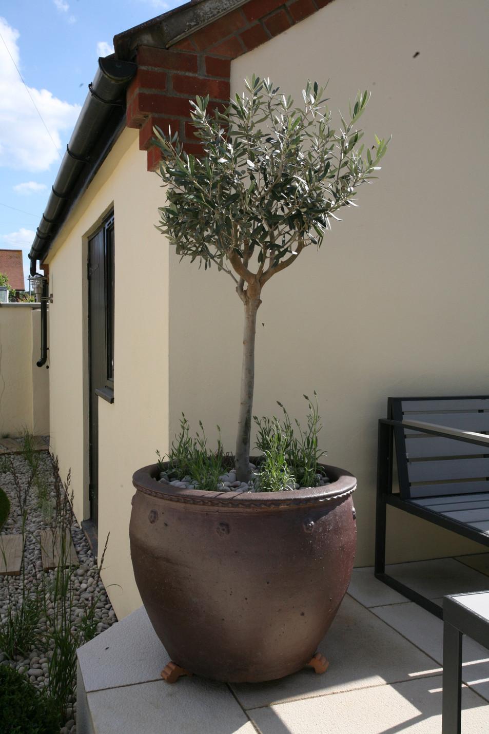 Garden Designer & Landscape Gardener Cromer North Norfolk(4).JPG
