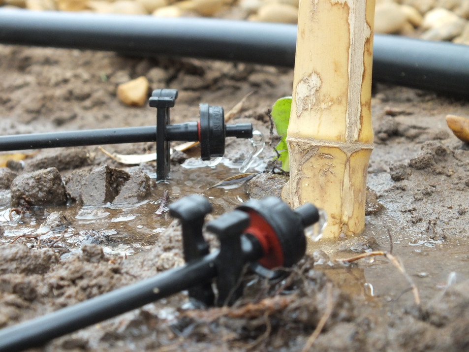 norwich garden irrigation installer