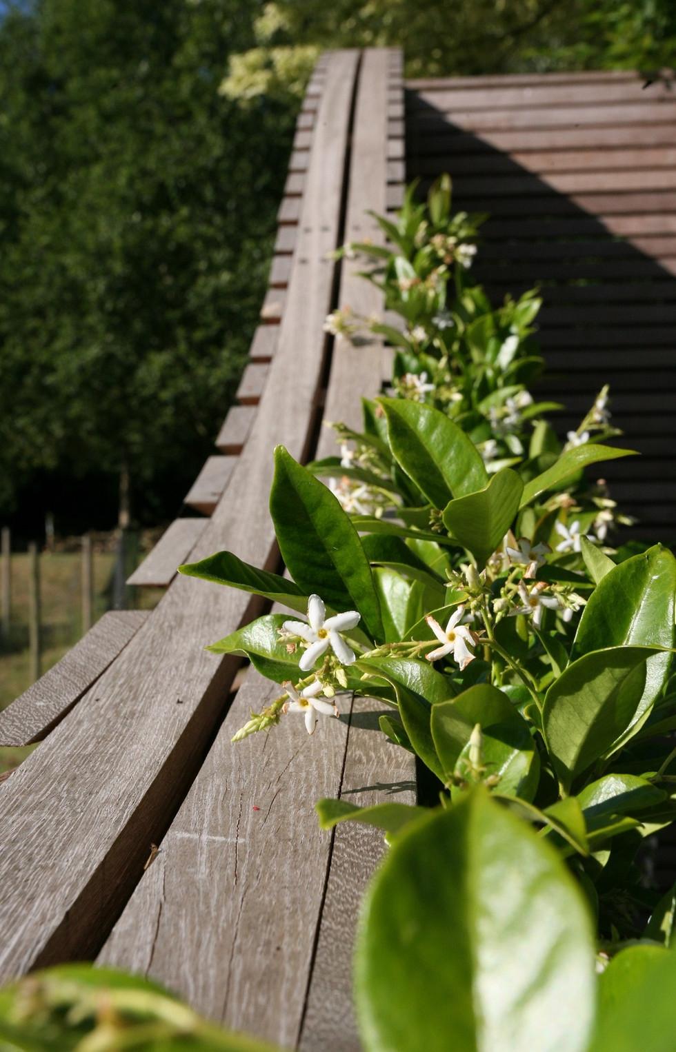 Garden Design & landscape gardening norwich norfolk.jpg