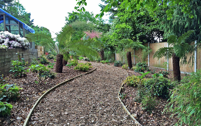 Woodland planting. Thorpe, Norwich, Norfolk