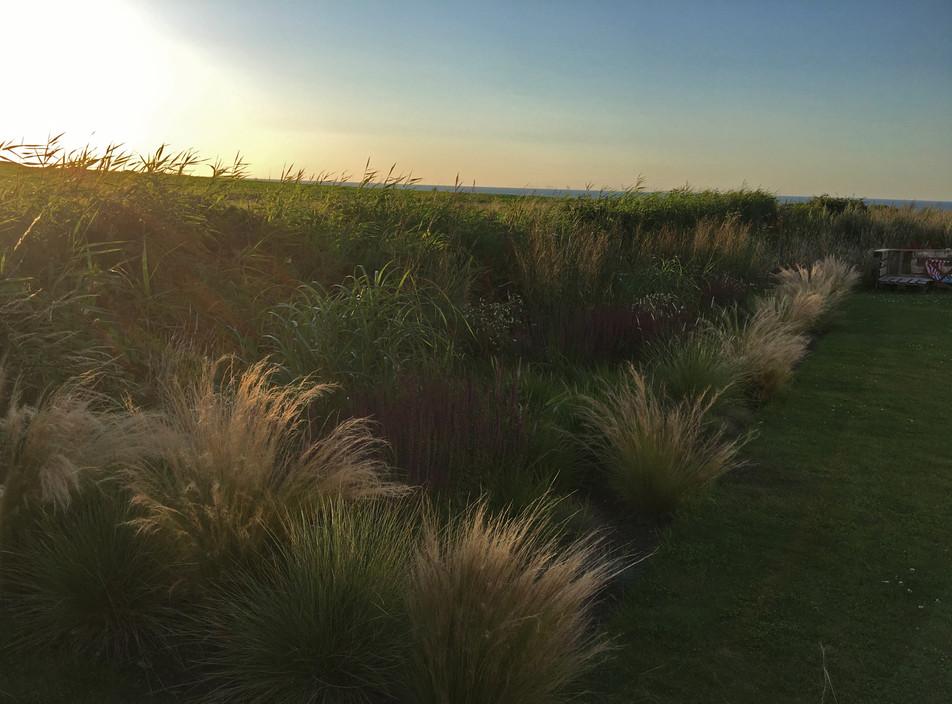 Rocky Bottoms informal grassy border, West Runton, near Cromer, North Norfolk.