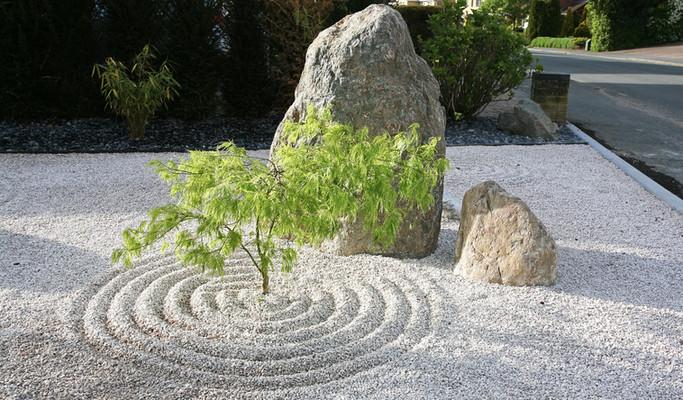 Japanese acer garden
