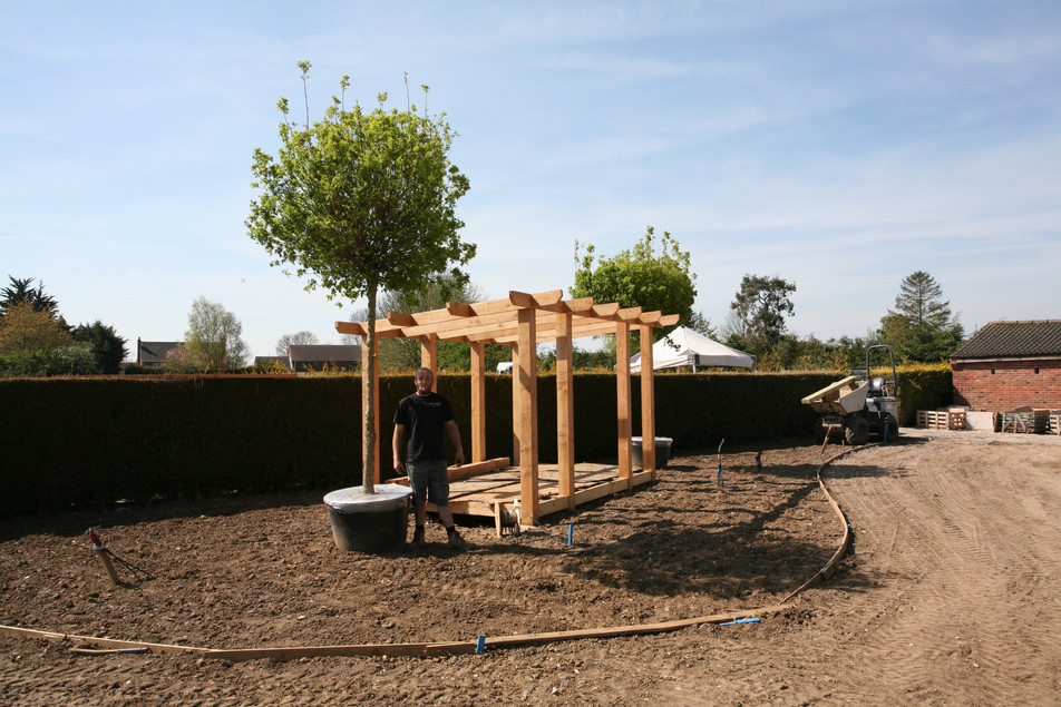 Large Acer Nanums, with Ben for scale. Wymondham, near Norwich, Norfolk.