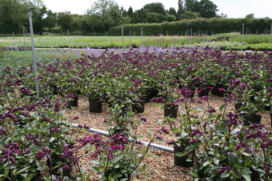 Our wholesale suppliers keep our prices down, and offer much more variety