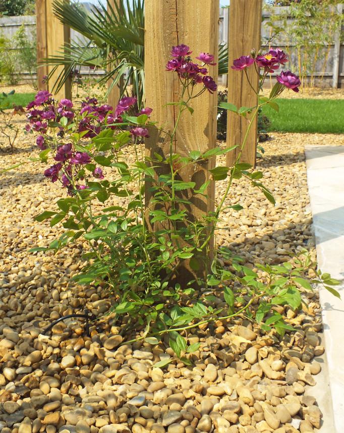 garden irrigation system installer norwich norfolk.JPG