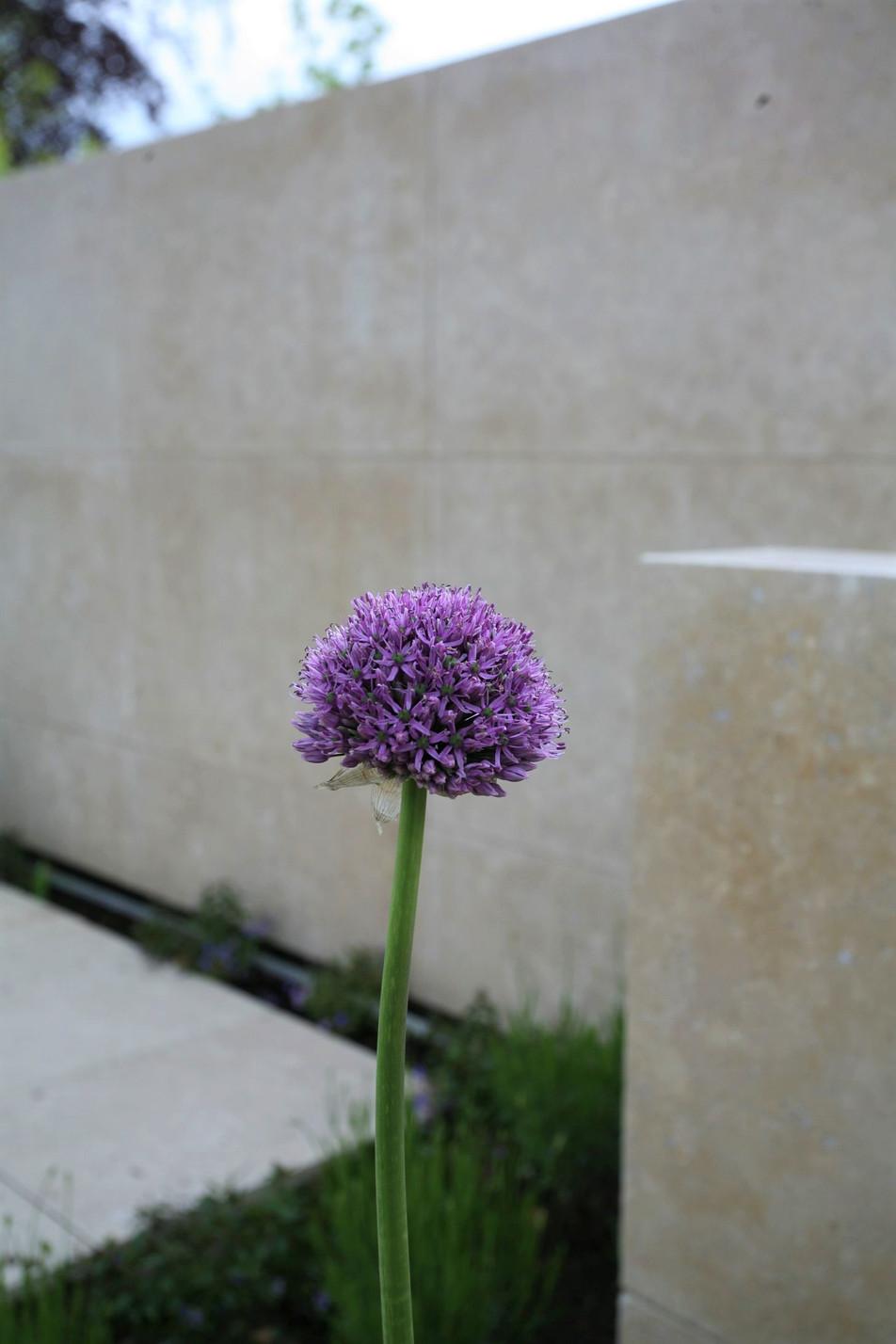 garden designer norfolk.jpg