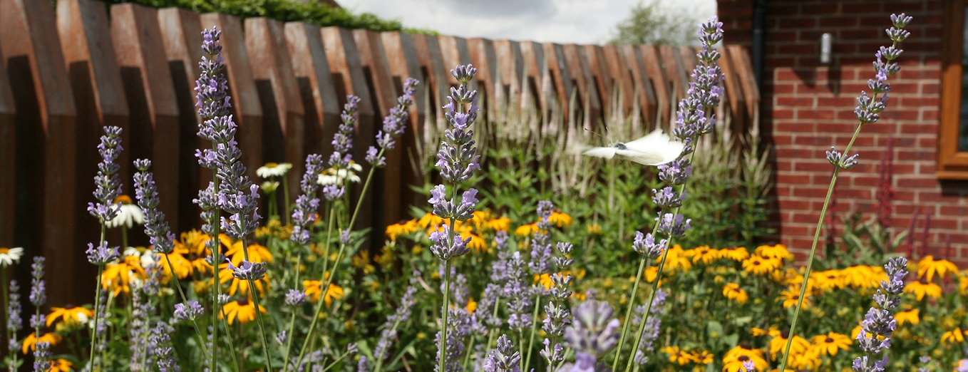 planting design with lavender