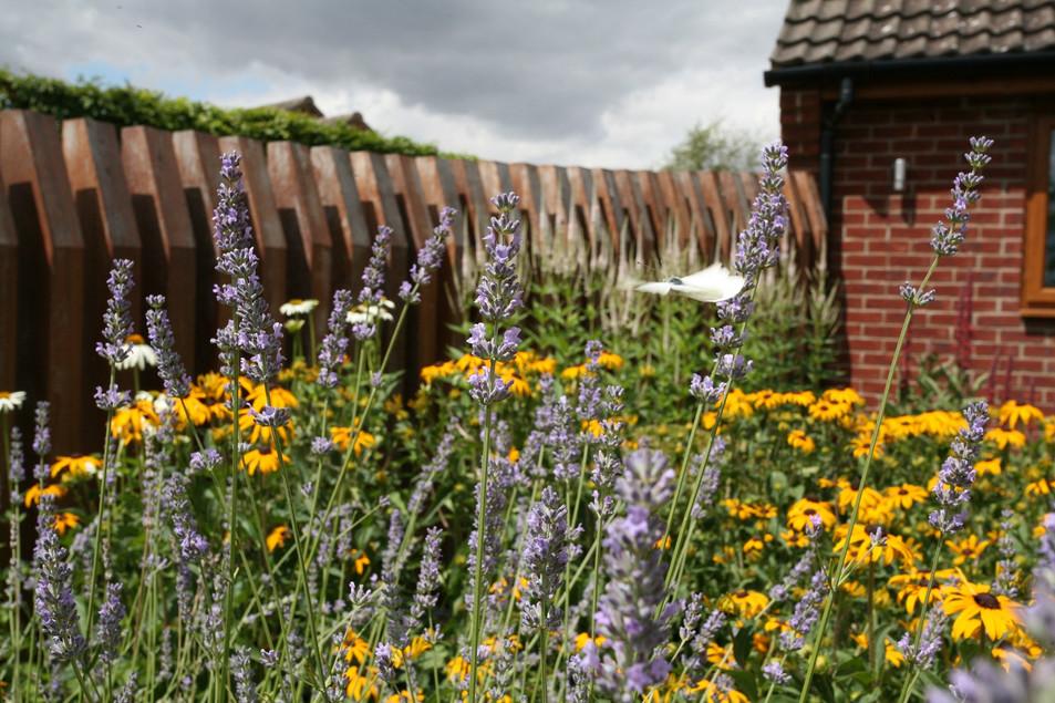 garden designed with lavender.jpg