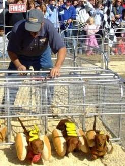 hotdogweb.JPG.jpg
