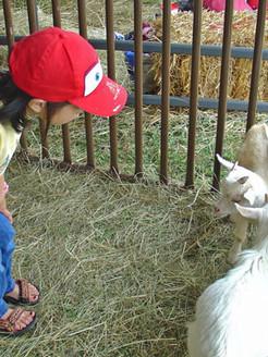 Barnyard-Petting-Zoo.jpg